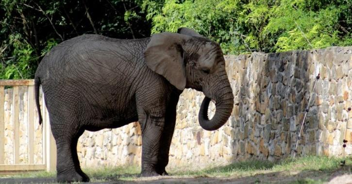Stressed elephants at Warsaw zoo to be given medical marijuana
