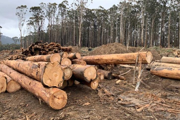 Logging in Australian Forests