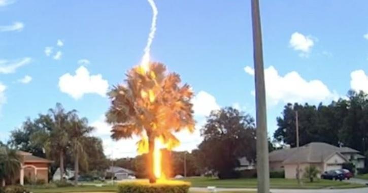 Video captures lightning striking a palm tree