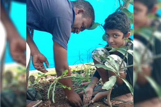 Pavan with new sapling