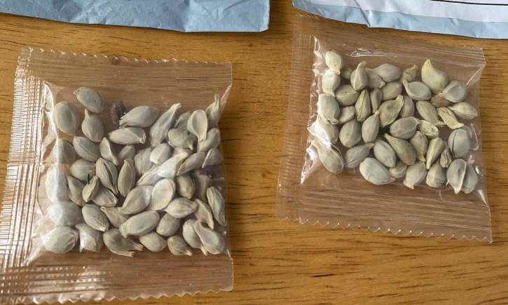 China Seeds
