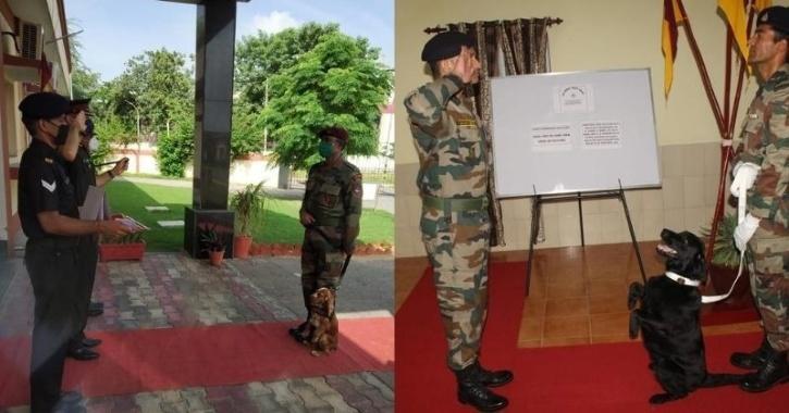 Indian Army dogs Vida, Sophie honoured with COAS Commendation Cards