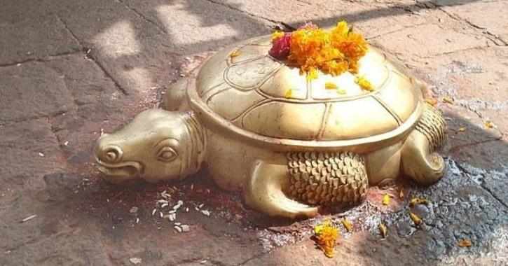 Turtle worshipped as god
