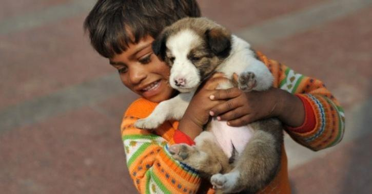 adopt indian dogs