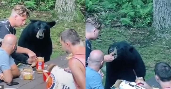 Bear waiting for sandwich