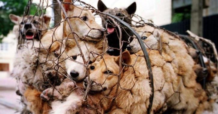 dogs animal cruelty
