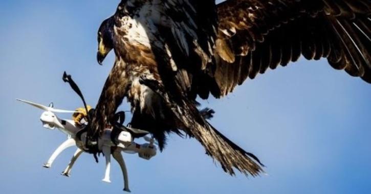 Eagle attack drone