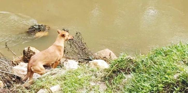 Munnar Landslide, Munnar Landslide Rescue, Munnar Landslide Dogs, Munnar Landslide Kuvi, Kuvi Dog Munnar