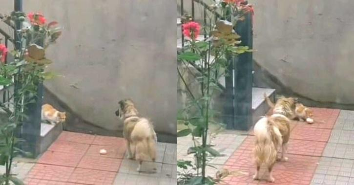 dog shares food with cat
