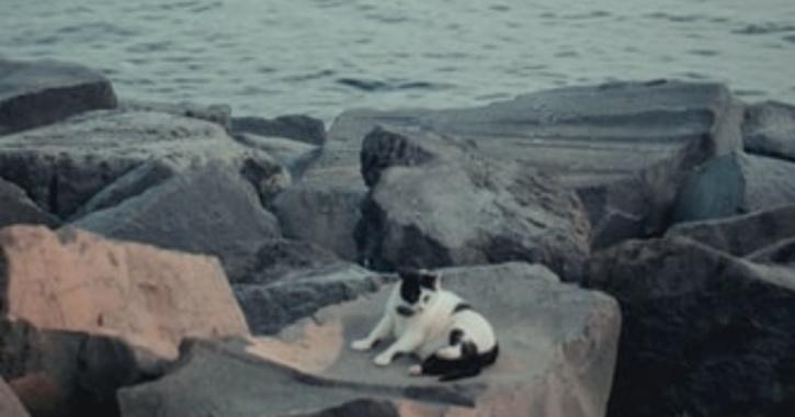kitten mumbai recused by a man