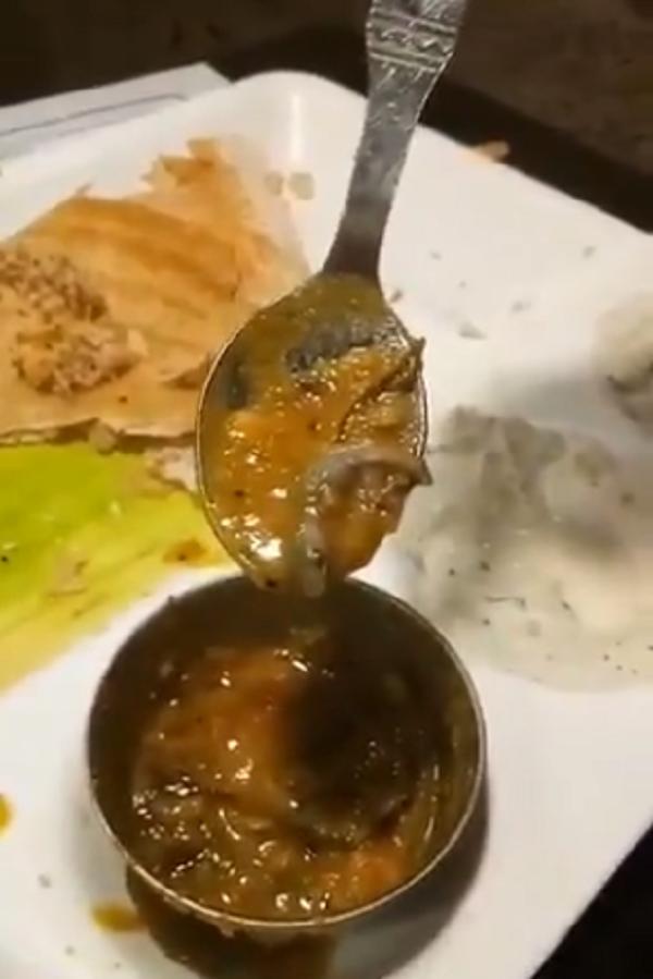 dead lizard in sambar
