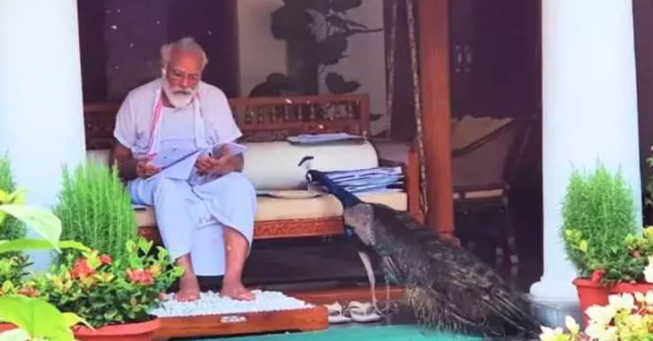 PM posts video of him feeding peacocks