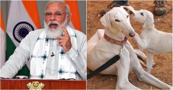 narendra modi, indian dogs