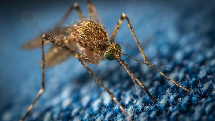 mosquitoes are being genetically modified