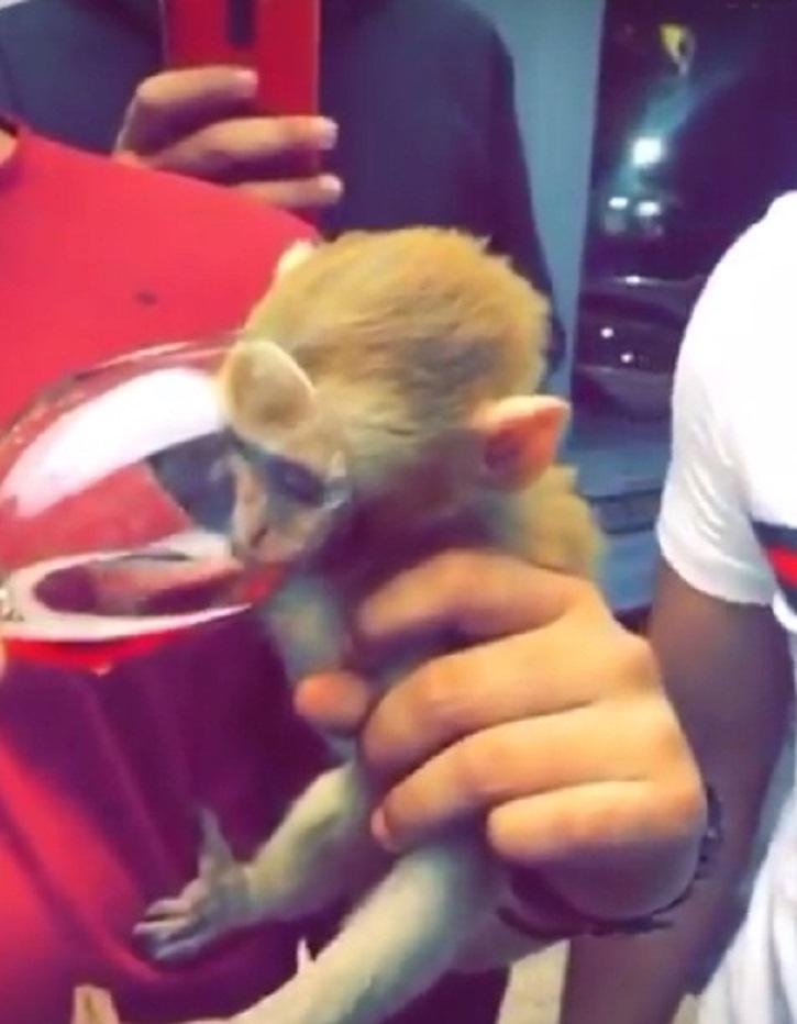 Monkey alcohol