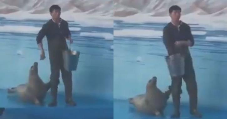 Seal asking for food