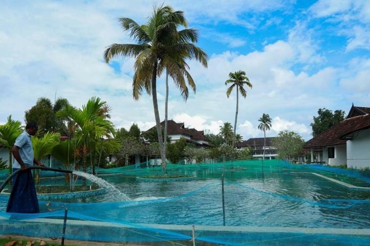 pool turned into a fish farm