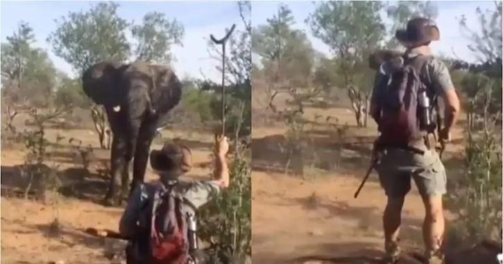 Tusker charging towards man