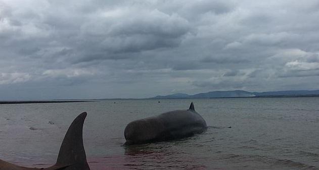 Whales on beach