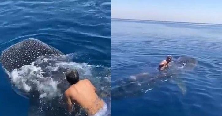 Man rides whale shark