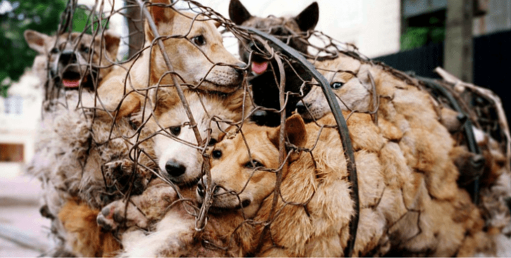 Dogs for slaughter
