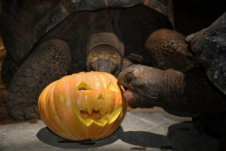 Giant Aldabra Tortoise, Madras Crocodile Bank
