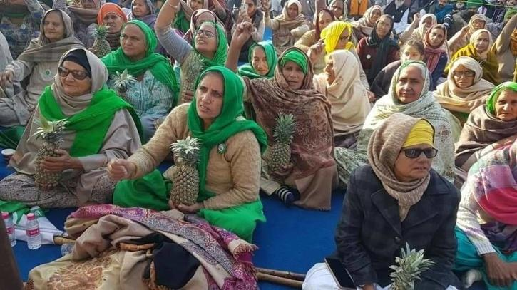 Kerala Pineapple, Delhi Farmers Protest