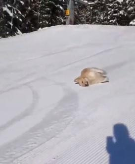Adorable dog plays in snow