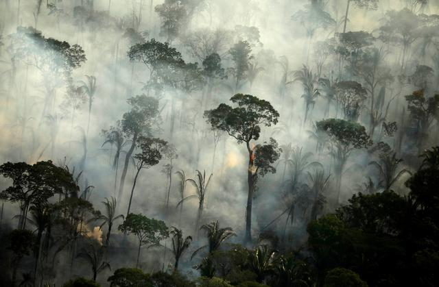 The Amazon plays a vital role in curbing climate change, but destruction of the rainforest has only accelerated in recent years, found the study.