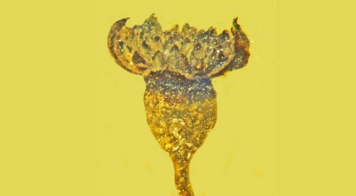 flower in amber