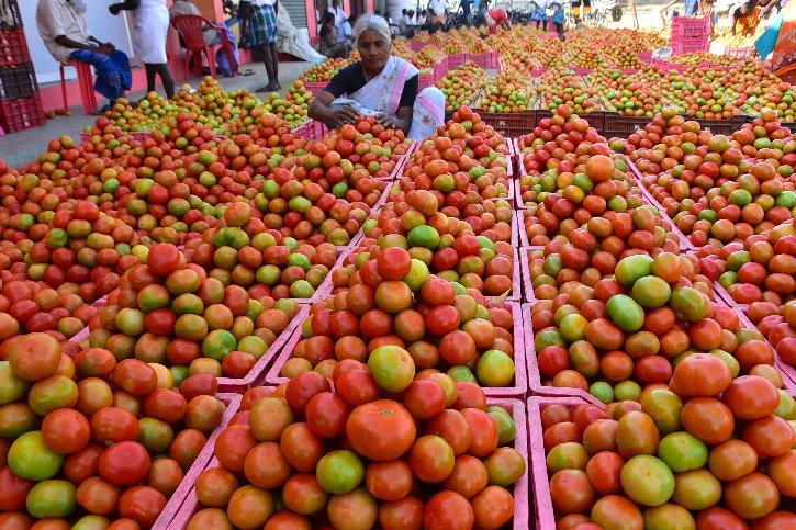 Tomato Prices