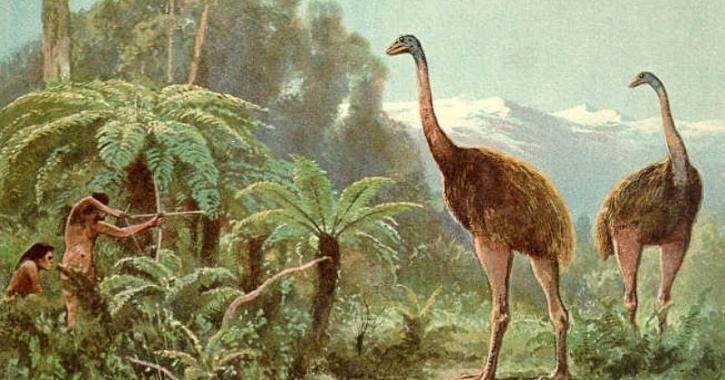 Flightless birds extinction