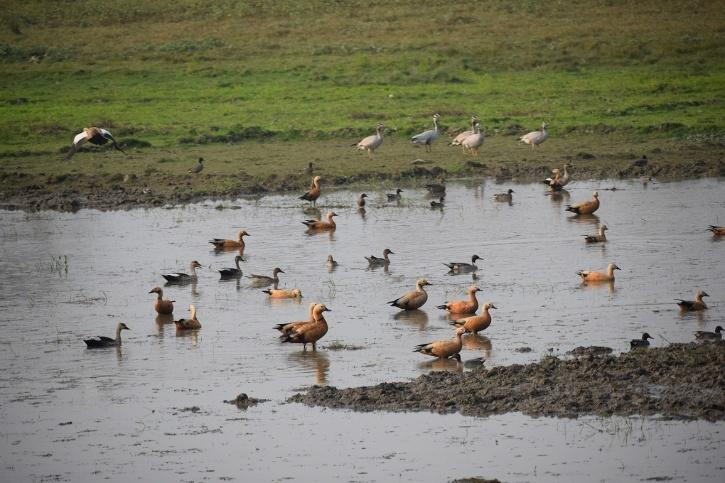 The wetlands offer water not just to park animals but migratory birds as well
