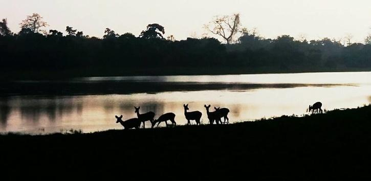 When there is a shortage of water, some animals go to the Brahmaputra on the park's northern side