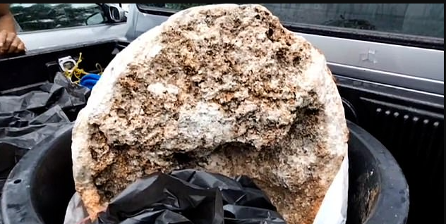 Ambergris - or whale vomit - is found in sperm whale