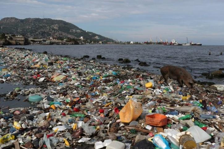 In Canada, volunteers found the highest number of plastic items they collected came from Costco