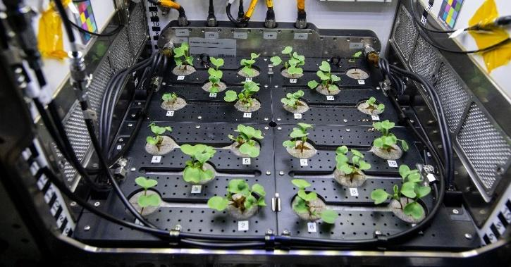 NASA Grows Radishes Under Microgravity In Space In Pursuit Of Food For Future Astronauts