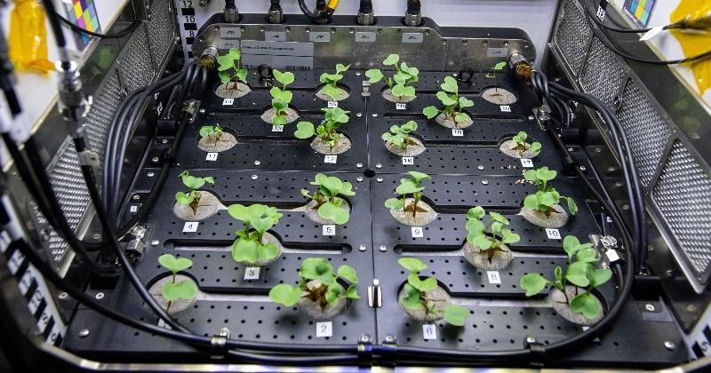 NASA Grows Radishes In Space In Pursuit Of Food For Future Astronauts - India Times