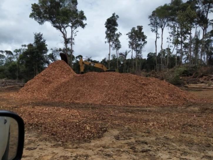 Heavy equipment is already carrying out significant forest clearing, even though the new branch road has yet to be formally approved.