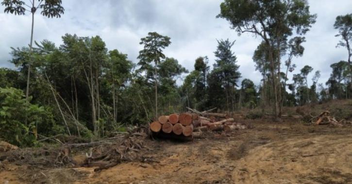 Neatly stacked logs along a cleared section of the yet to be approved BR-364 branch road in Amazon.