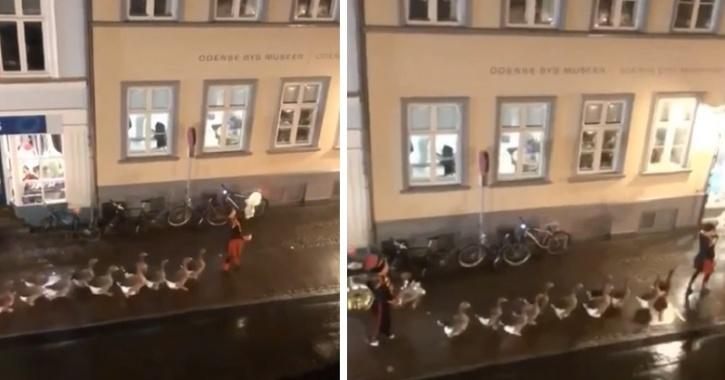 Band of marching ducks wins hearts online