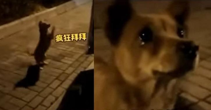 Dog cries after being fed by stranger