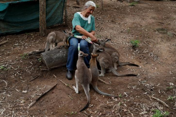 baby kangaroos from the fires