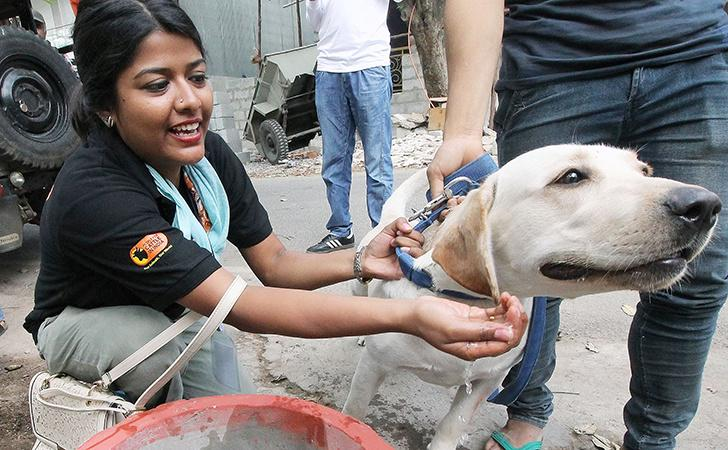 Woman helping dog
