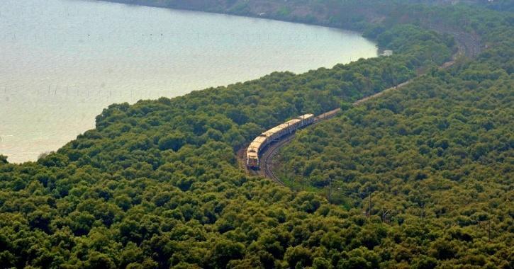 Rise In Mangrove Cover