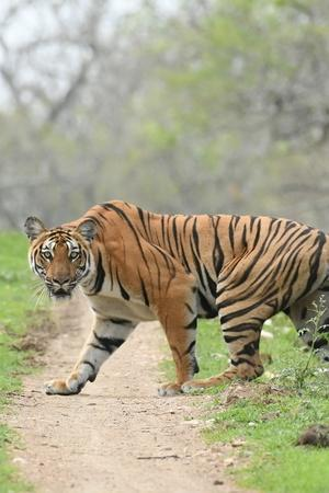 Goa Loses 4 Tigers In Just 4 Days