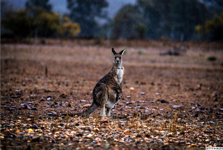 australian widlfire