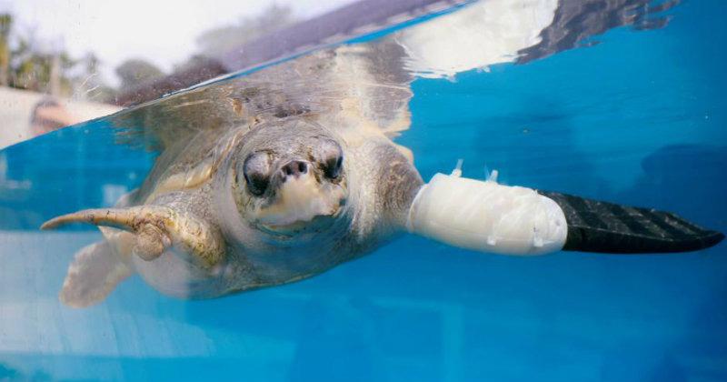 Goody sea turtle