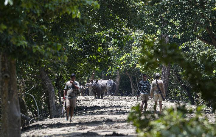 Kaziranga National Park, Kaziranga National Park Area, Kaziranga National Park Tiger, Kaziranga National Park Rhino, Kaziranga National Park Land