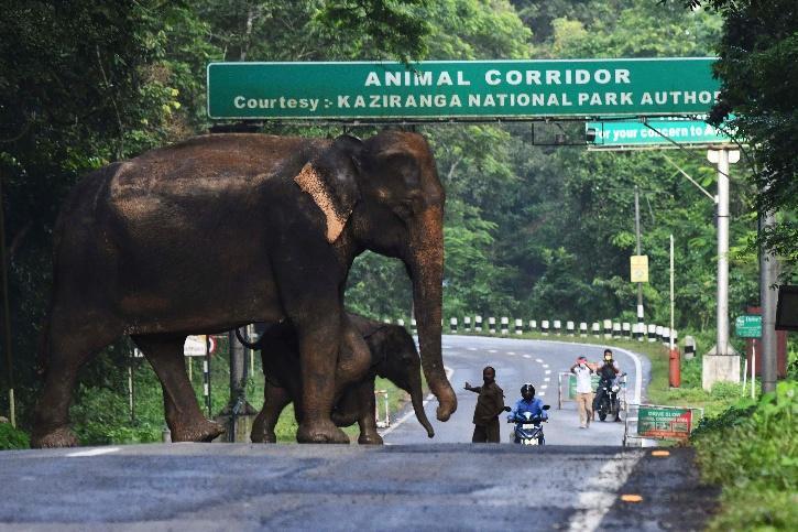 elephant national park kaziranga